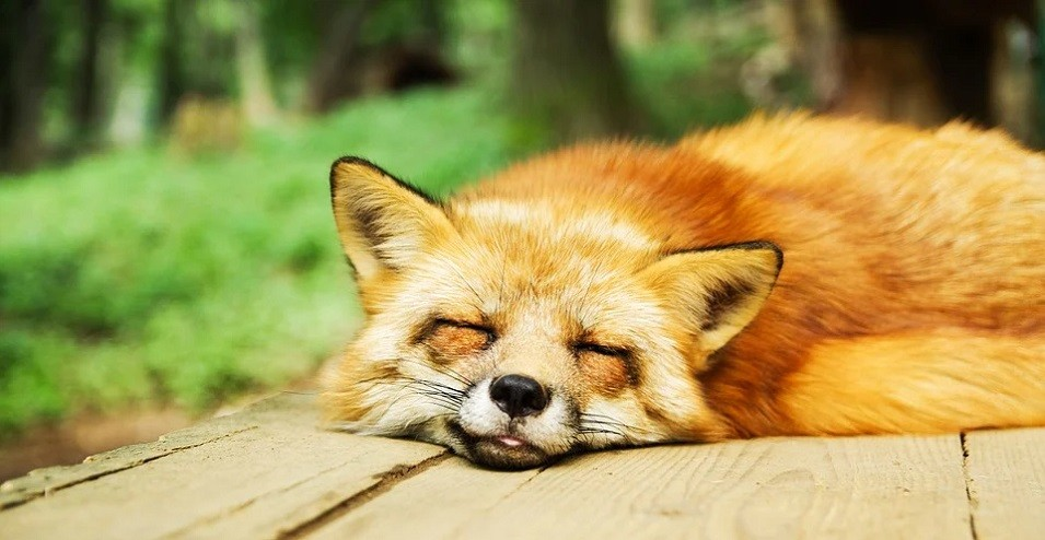 Schlaf-Tipps