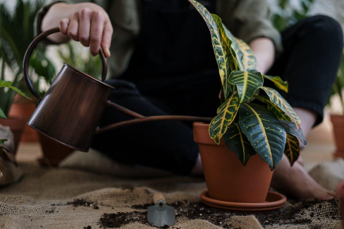 zimmerpflanzen pflegen